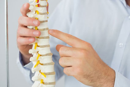man holding spine model